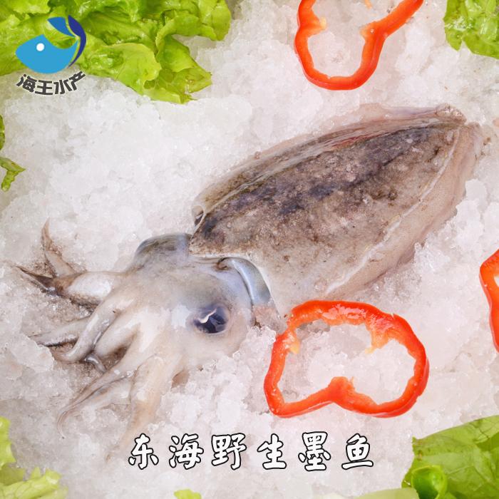 东海鲜活海鲜 墨鱼 目鱼 乌贼 深海鱼 约5-7两/只