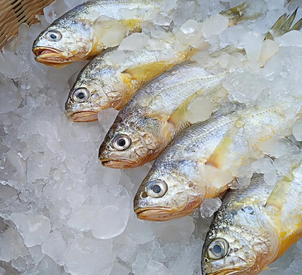 东海野生小黄鱼1斤6-7条