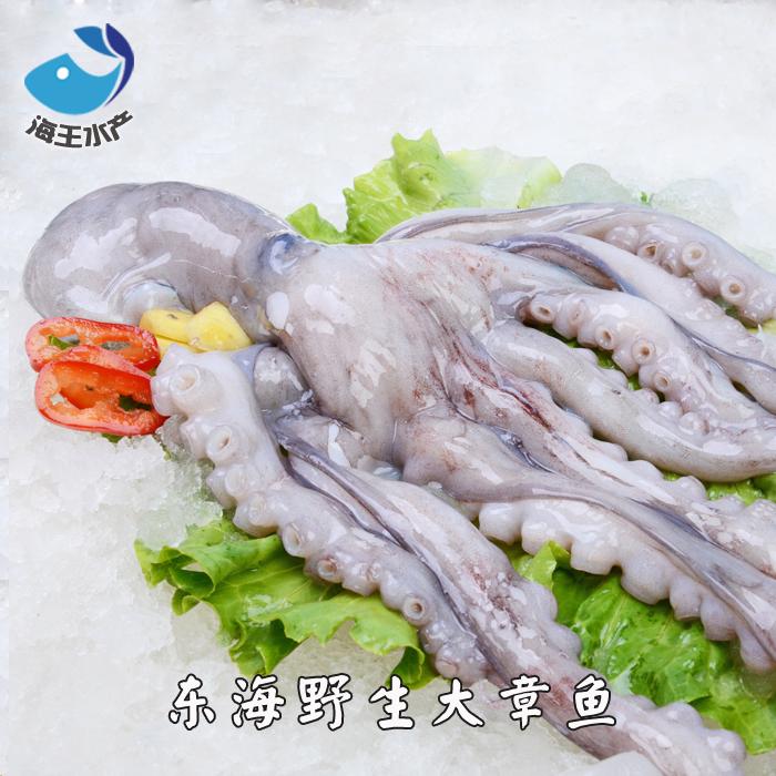 东海鲜活海鲜 野生大章鱼 八爪鱼 章鱼小丸子 每只约1斤