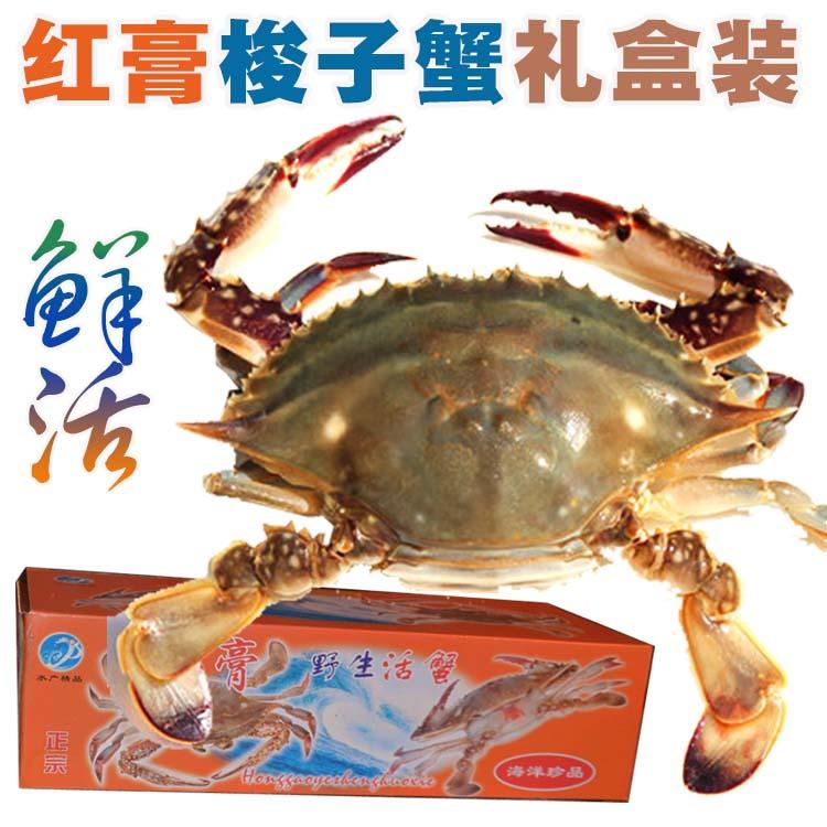 活螃蟹礼盒装 鲜活红膏梭子蟹礼盒装